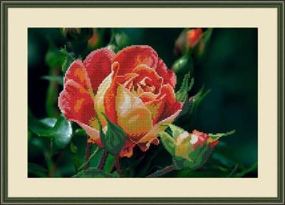Набор для вышивания бисером «Чайная роза» - фото 4659